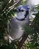 Birds 11-23-08 088ps