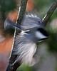 Birds 11-23-08 001ps