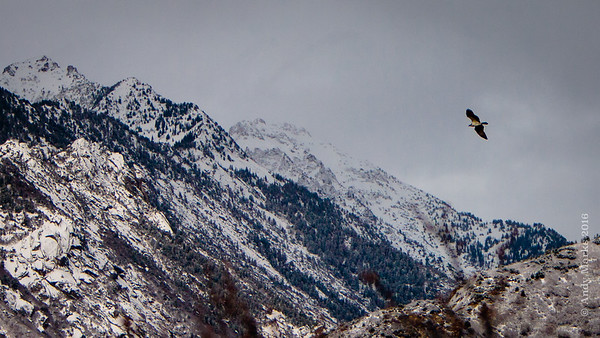 Osprey, seconds away from those peaks..