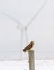 Short-eared Owl Highland Wind Project<br /> Short-eared Owl Highland Wind Project Beaverdale, PA