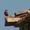 birdwatch-87_8518790944_o