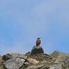 birdwatch-72_8518791150_o
