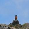birdwatch-70_8517678803_o