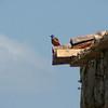 birdwatch-83_8518791080_o