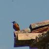 birdwatch-86_8518791190_o