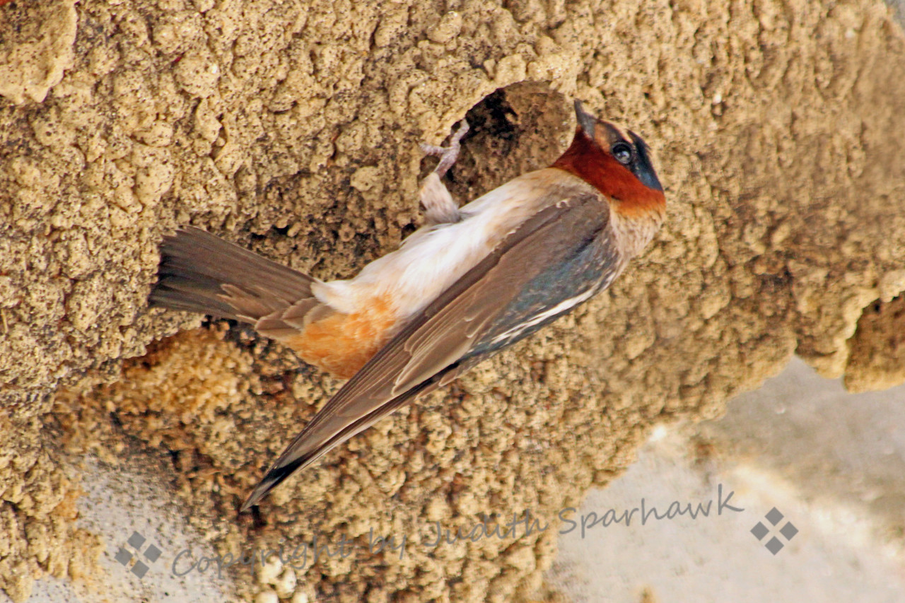 **Published in the August/September 2013 