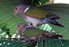 7 01 06 Cairns and Daintree Rainforest Trip 223