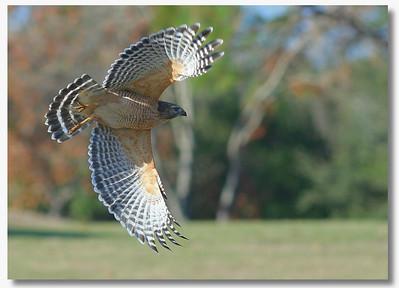 Hawk PSP USM IMG_6492