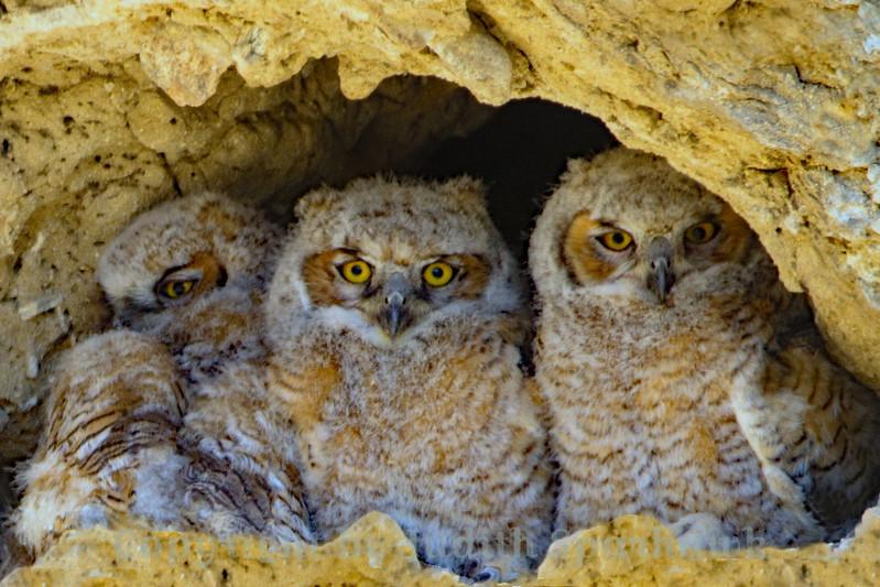 Little Owls Three