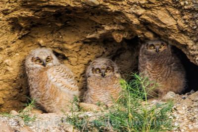 Owlets 1-2-3