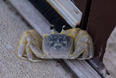 A Blue Crab.