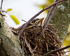 Robin Nest 07-02-11-066ps