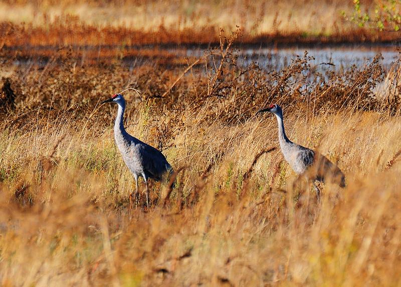 Consumnes River Preserve 2009