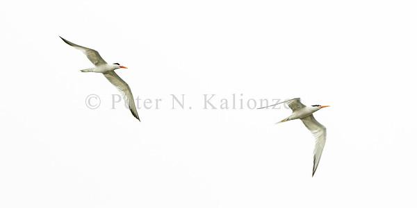 PKalionzesOnshorePhoto-0666