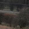 Shrike, Grey Grey Therfield Jan 2012