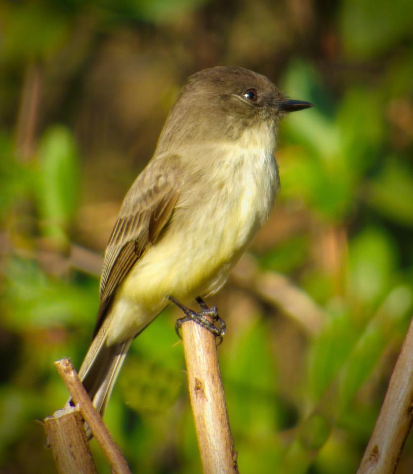 warbler. central Florida