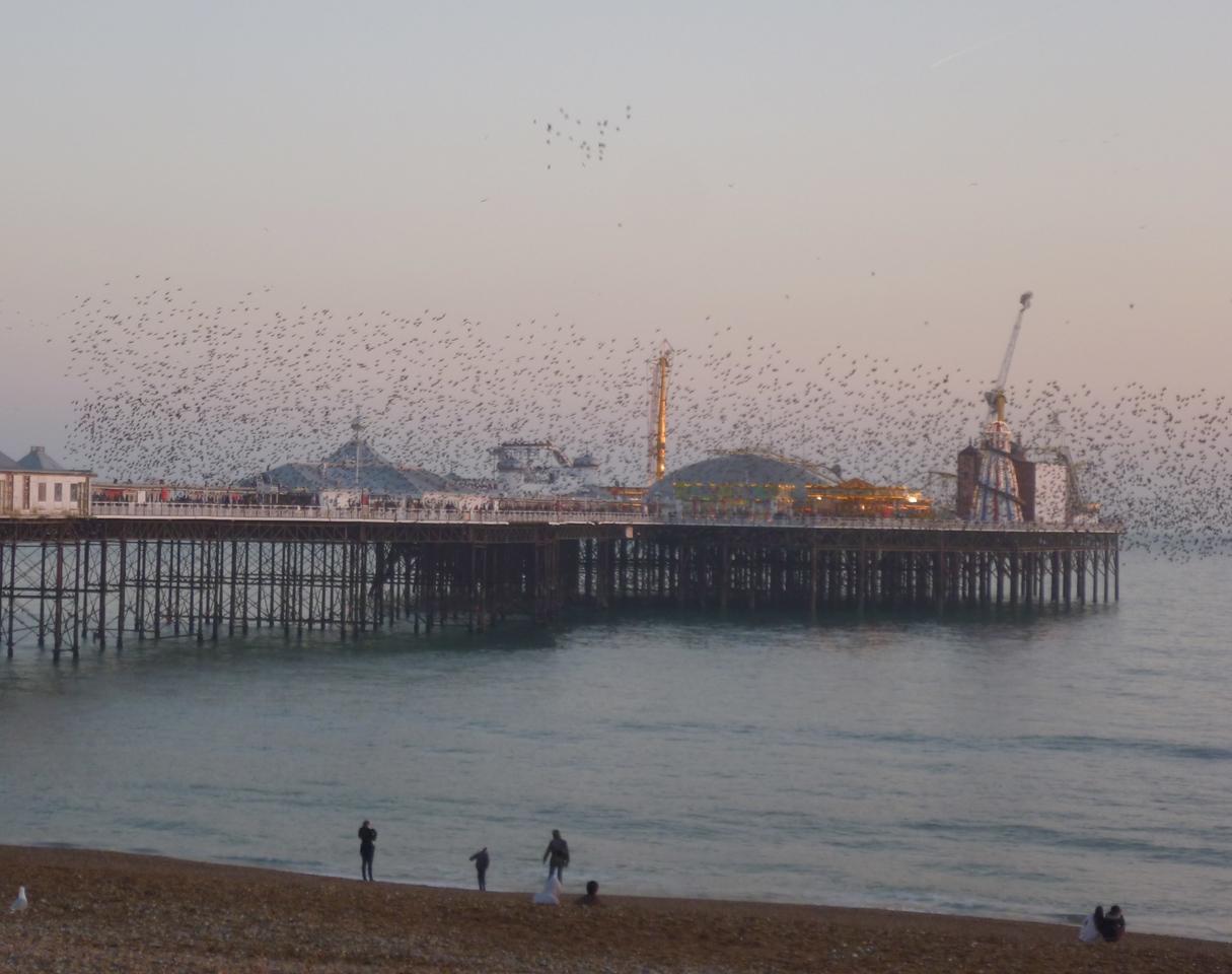 Starling murmur Brighton Feb 2013
