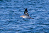 Whale Watch 08-11-17_130