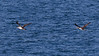Whale Watch 08-11-17_035