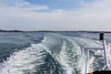 Whale Watch 08-11-17_013