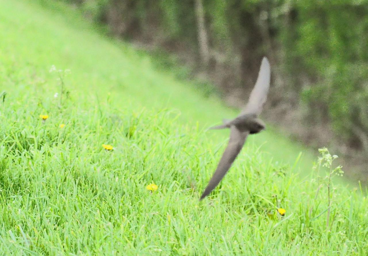Swift Wilstone May 2012