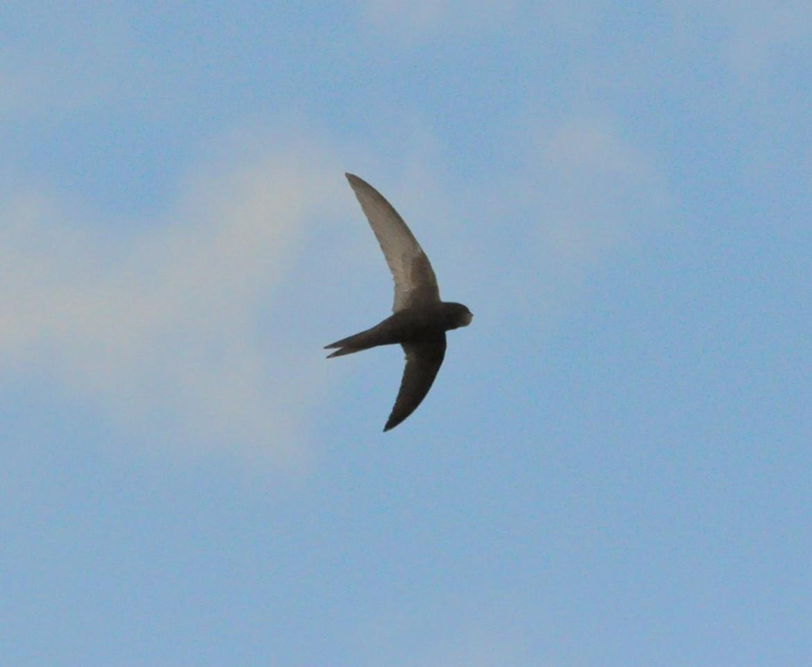 Swift, Wilstone, July 2012