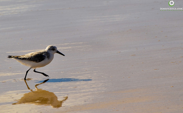Bird on a Maui Beach