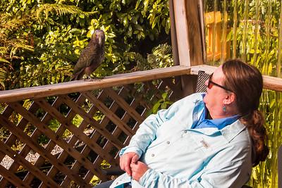NZ parrots