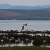 flamingo - habitat - fuente de piedra - 01 may_4591871052_o