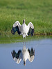 Wood Stork,<br /> Brazoria National Wildlife Refuge, Texas