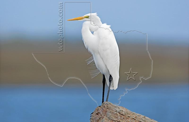 White Egret, Land, Sea, and Sky,<br /> East Beach, Galveston, Texas