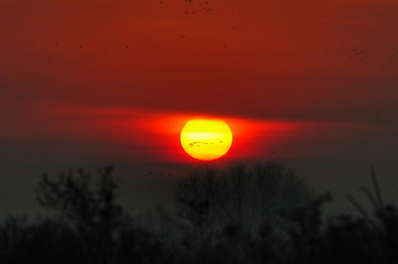 Consumes River Preserve Sunrise