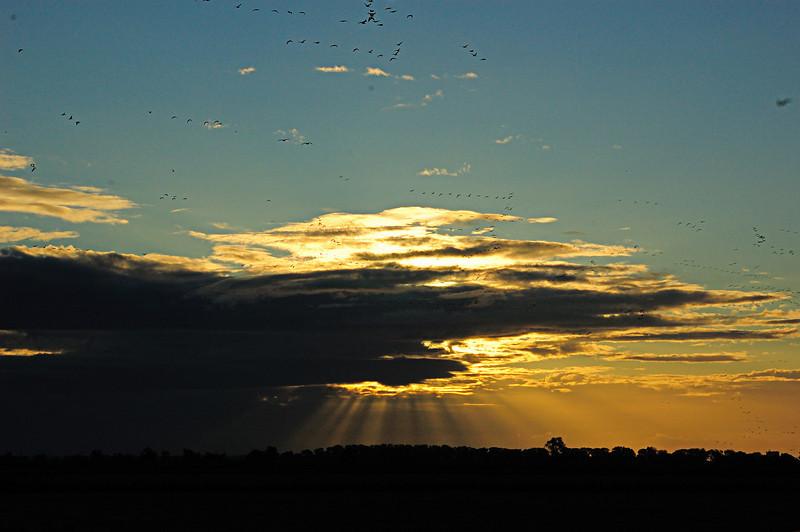 Sunday Sunrise Sacramento NWR