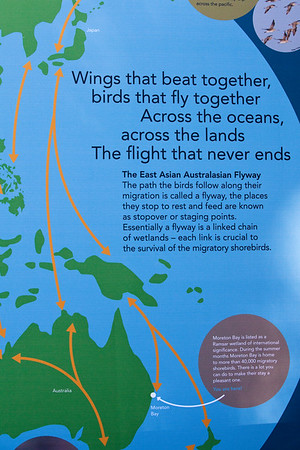 "World Migratory Bird Day, Boondall Wetlands, Brisbane. Photos by Des Thureson:  <a href=""http://disci.smugmug.com"">http://disci.smugmug.com</a>"