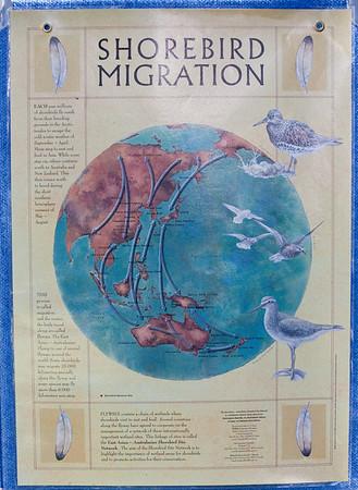 "World Migratory Bird Day, Boondall Wetlands, Brisbane. Photos by Des Thureson:  <a href=""http://disci.smugmug.com"">http://disci.smugmug.com</a>"