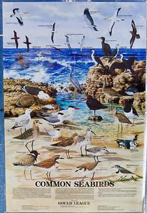 World Migratory Bird Day, Boondall Wetlands, Brisbane. Photos by Des Thureson:  http://disci.smugmug.com