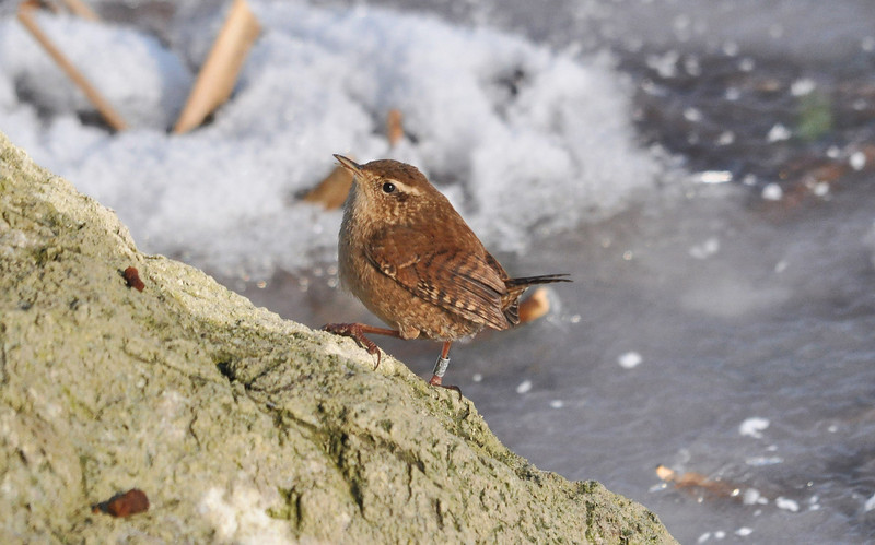Wren Marsworth Feb 11 2012