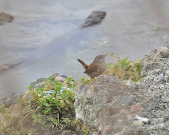 Wren Wilstone Jan 13 2012