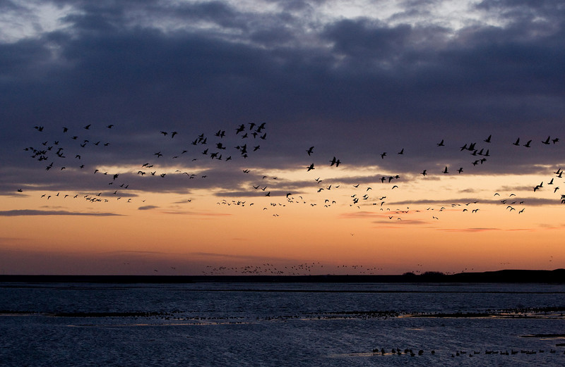 Sunset over the Moriaanshoofd with hundreds of geese flying around to find a good spot for the night