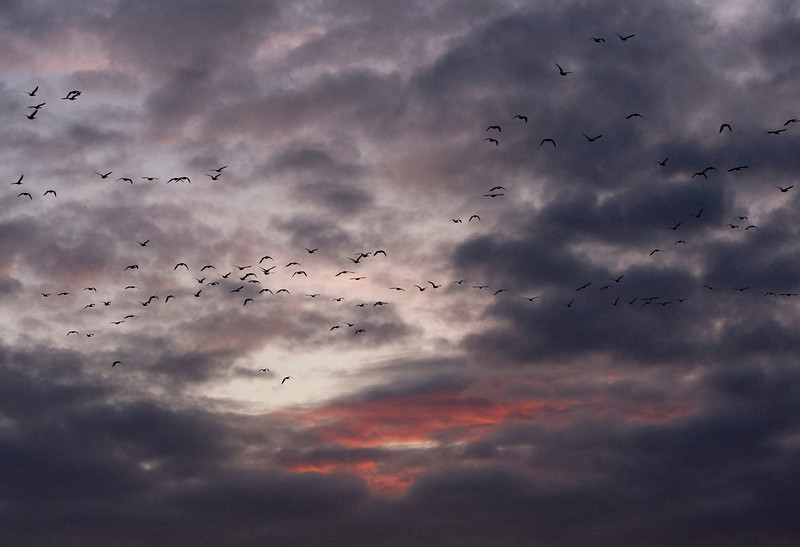 Dramatic clouds with geese flying overhead
