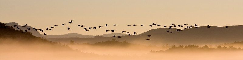 """71 Geese"" - taken on a foggy morning over the Verde River,  Clarkdale, AZ 2/16/08"