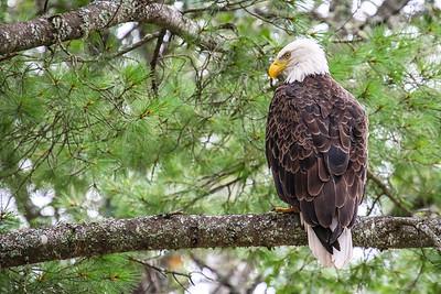 An Eagle Eye's View   2
