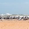 Beach Birdies