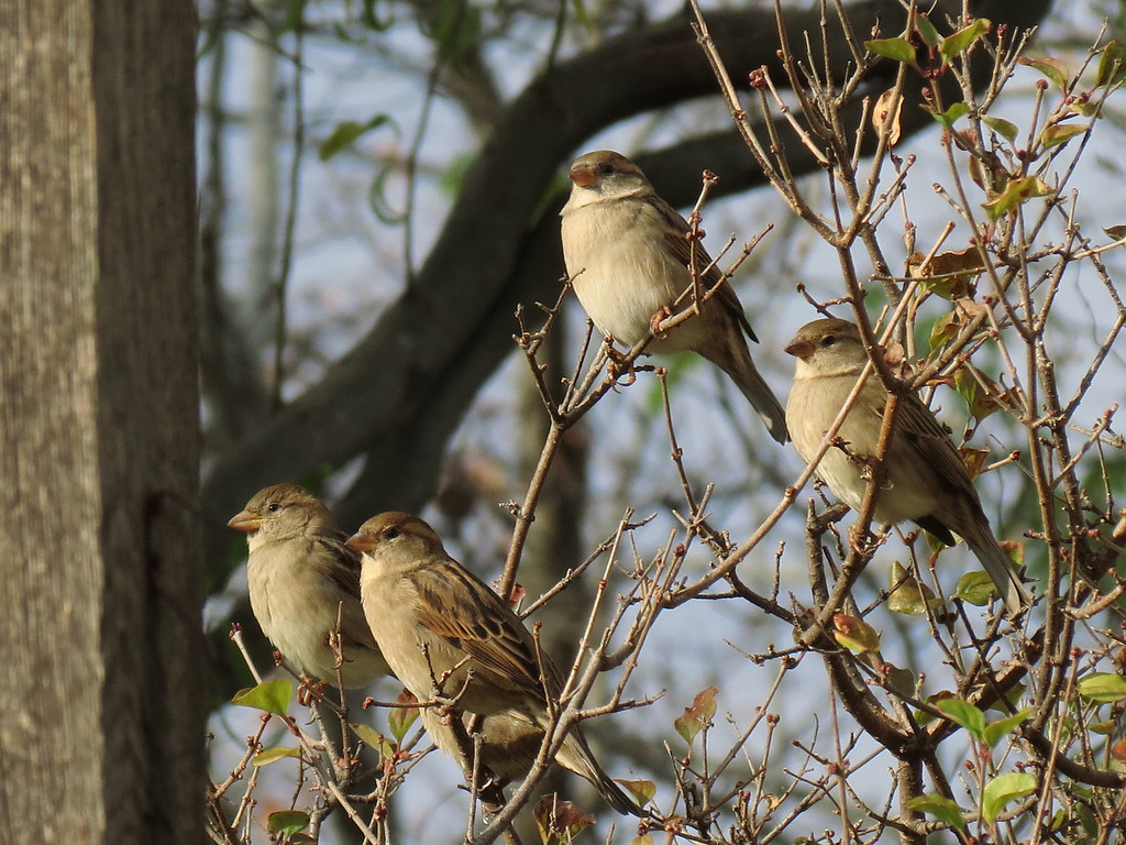 Sparrows on October 30th.