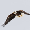 Fly Like an Eagle 3