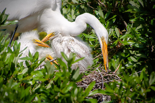 """Nest Maintenance"""