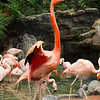 Flamingos at LA Zoo - 5 July 2010