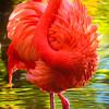 'Orange Flamingo'