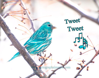 A Little Tweeting Blue Bird, Rictographs Images