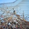 2-2-14 birds_0011adj